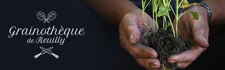 Journée partage de semences à Reuilly
